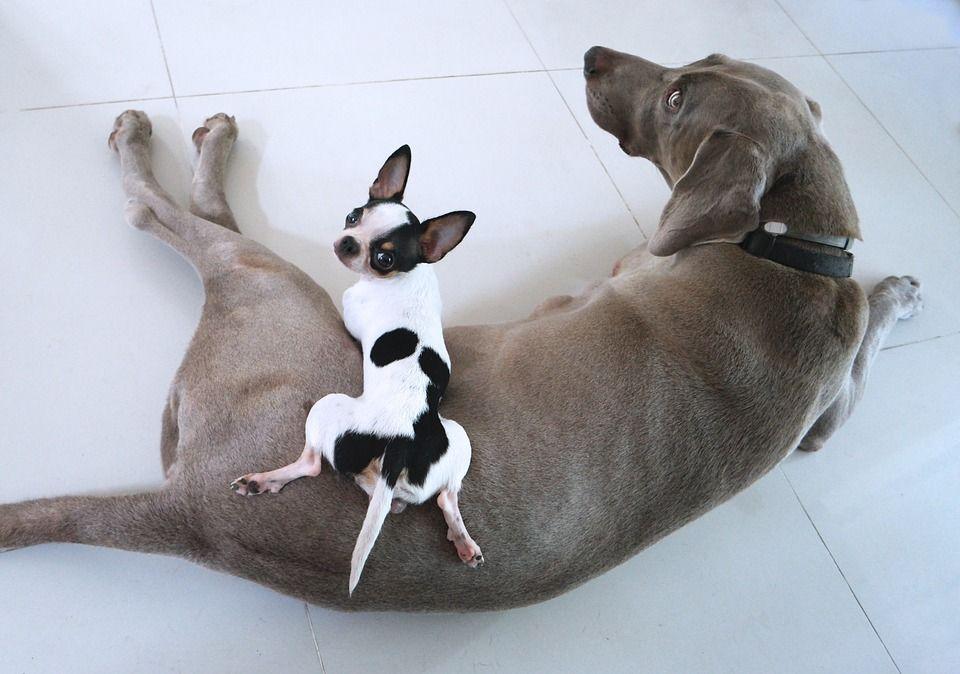 small-dog-big-dog