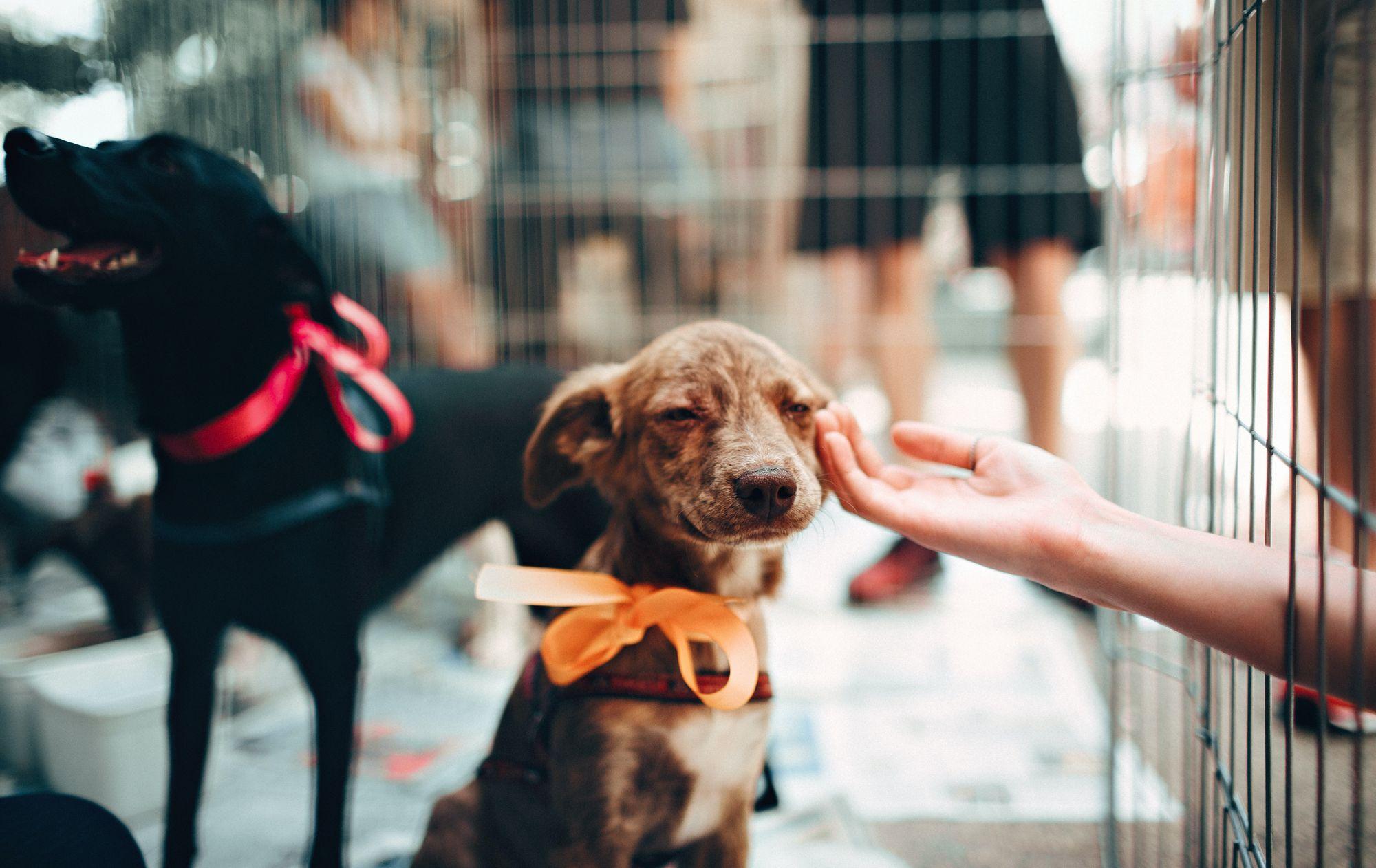 buy-or-adopt