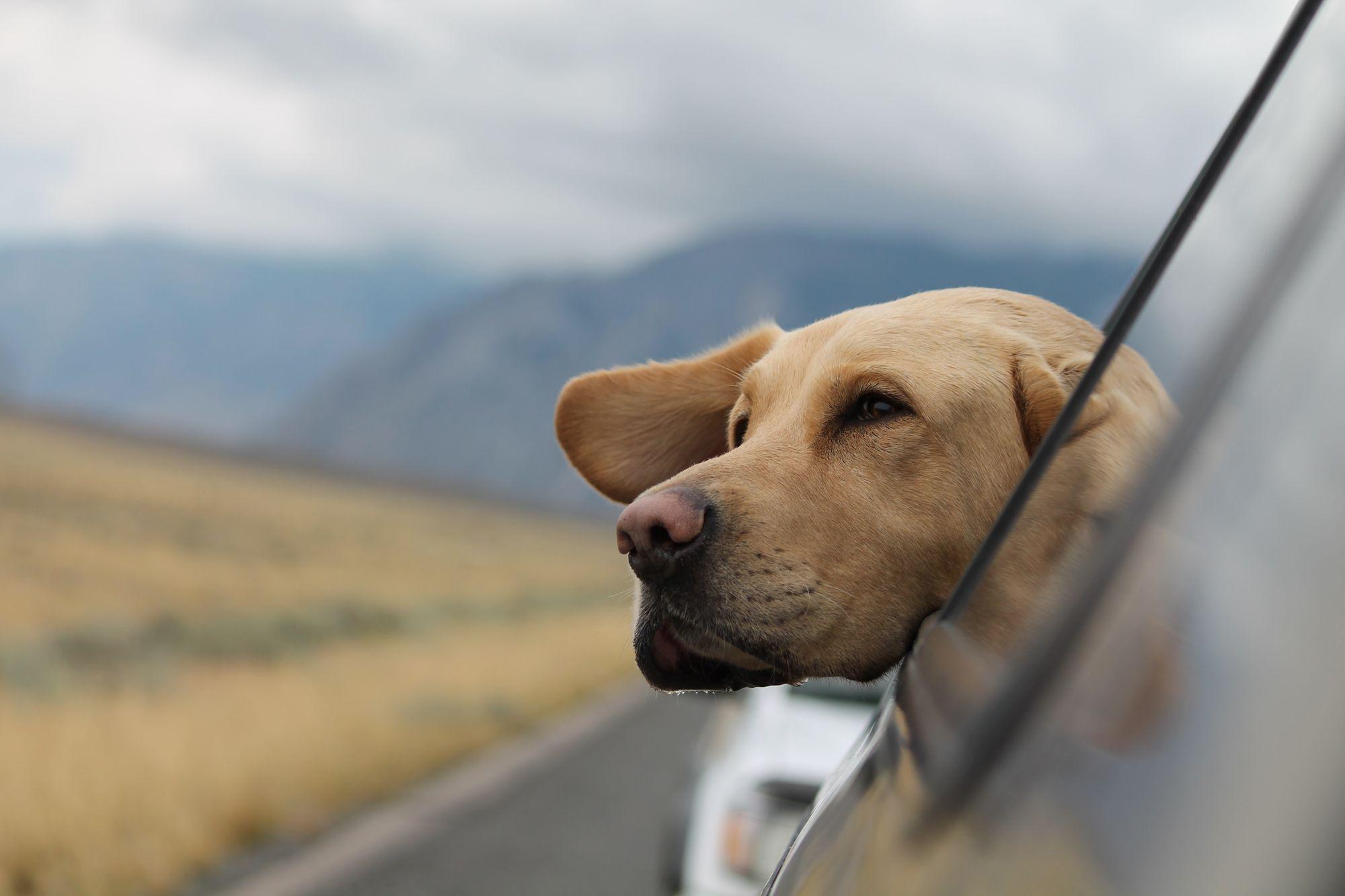 dog-trips-unsplash-source