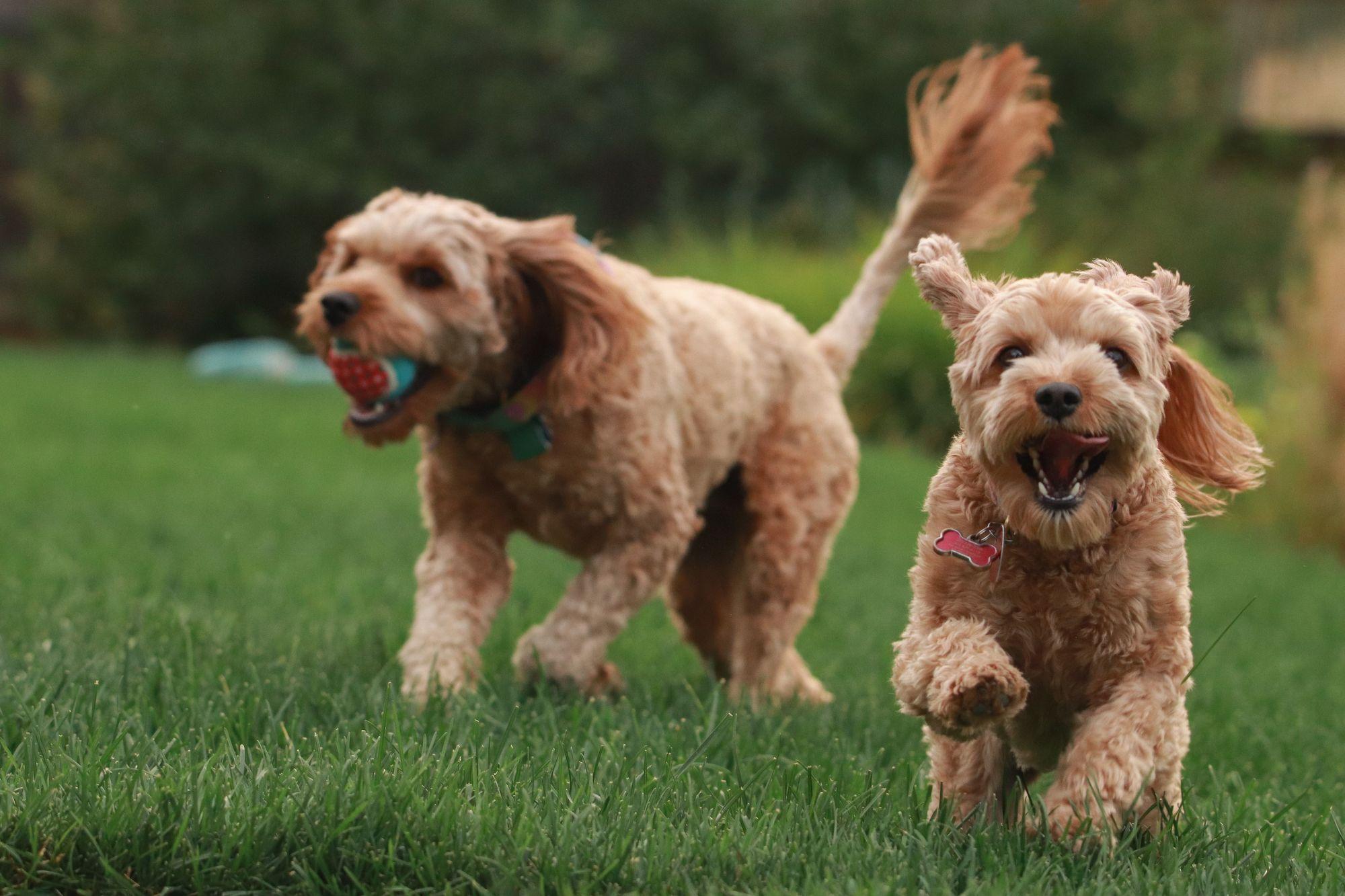 garden-activities-with-dogs-unsplash-source