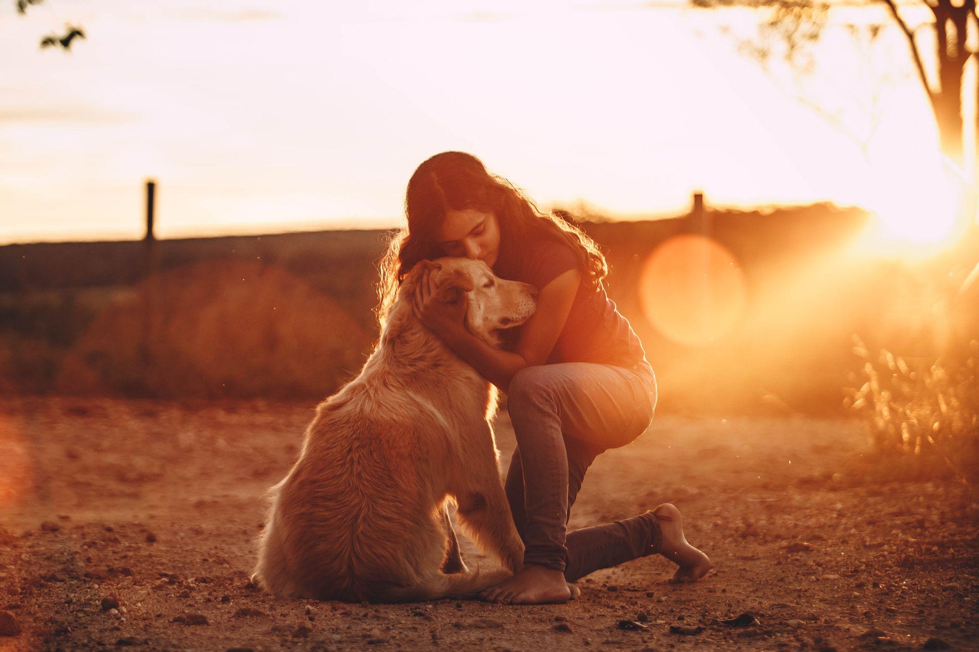 golden-retriever-affectionate-dog-breed-unsplash-source