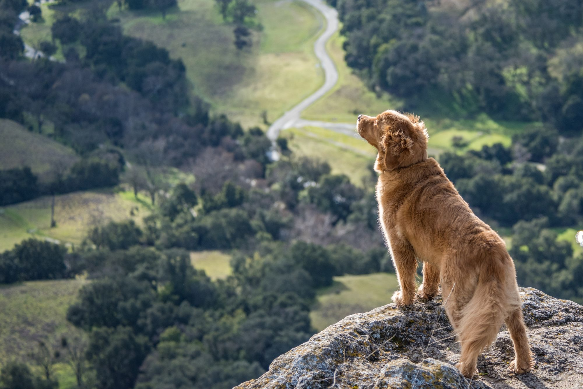 hiking-dog-unsplash-source