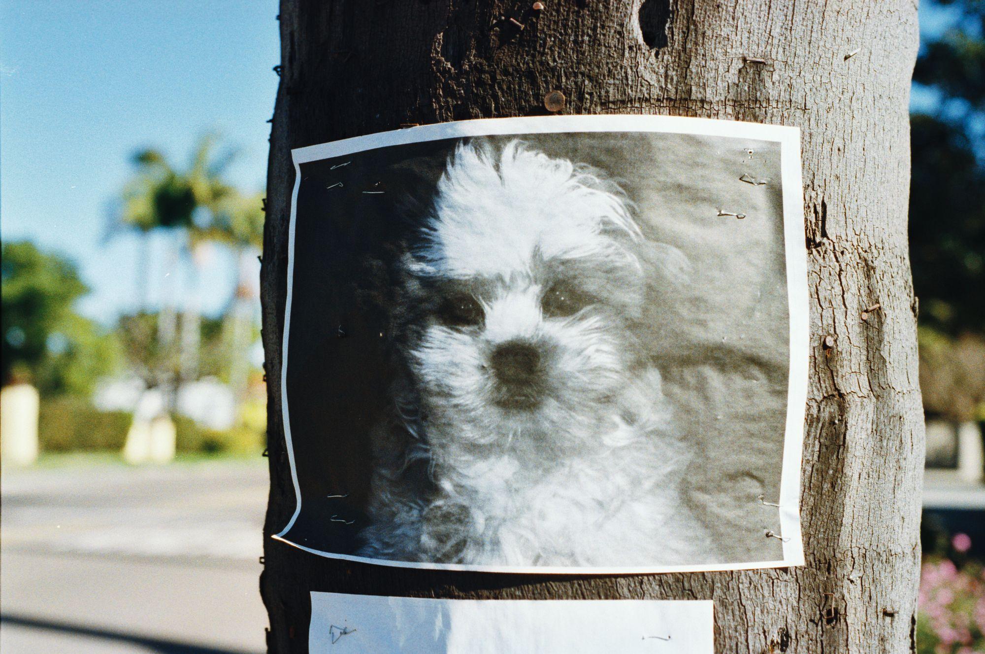 lost-dog-poster-unsplash-poster