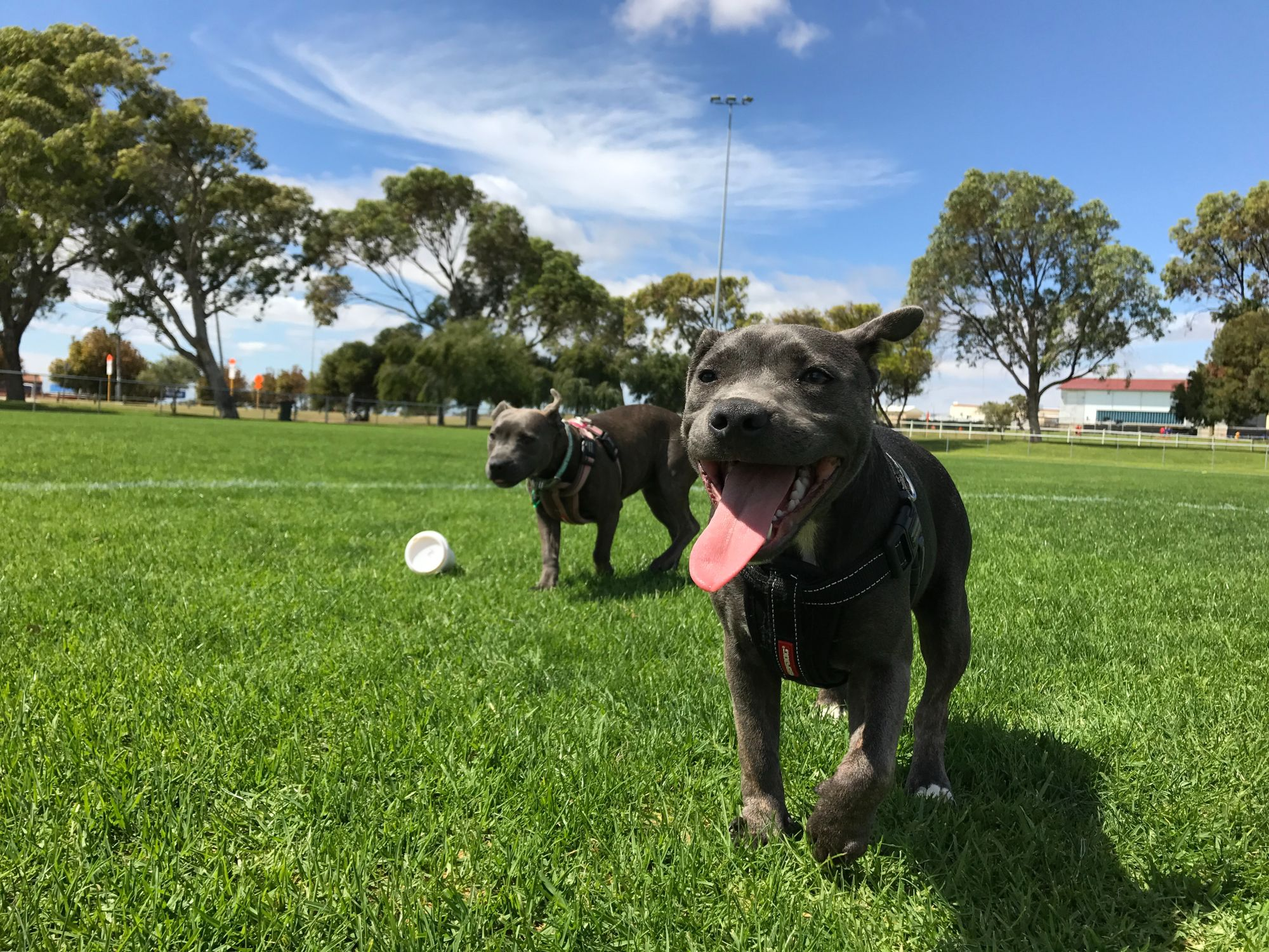 playing-in-the-park-with-dogs-unsplash-source