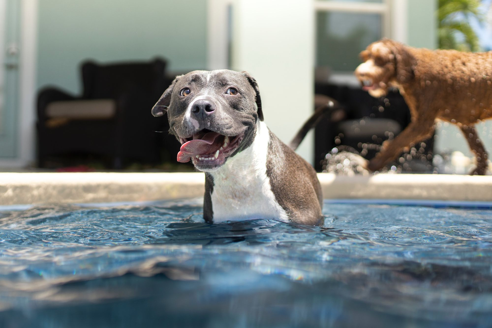 pool-activities-for-dogs-unsplash-source