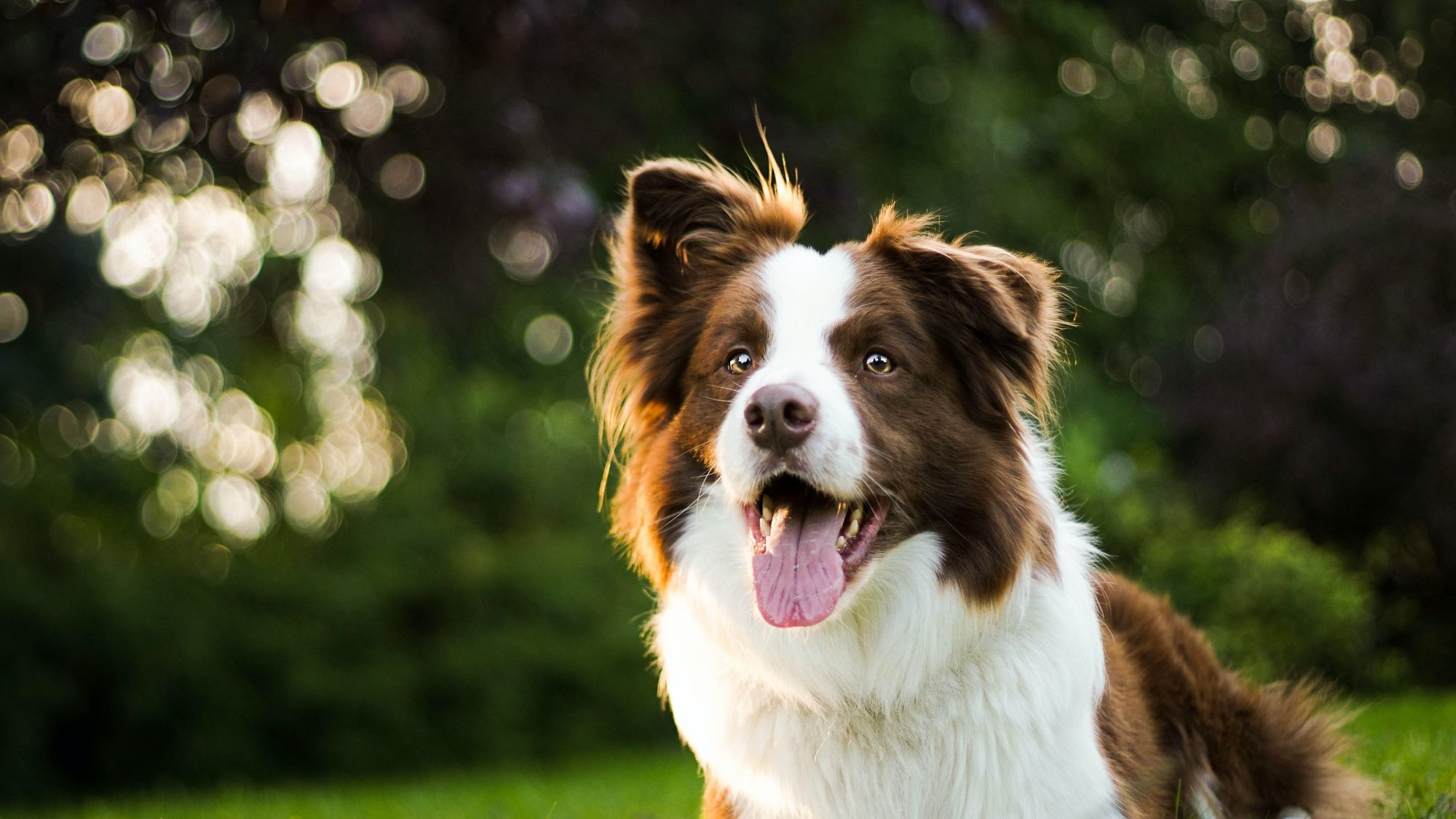 Greek Names for Male Dogs