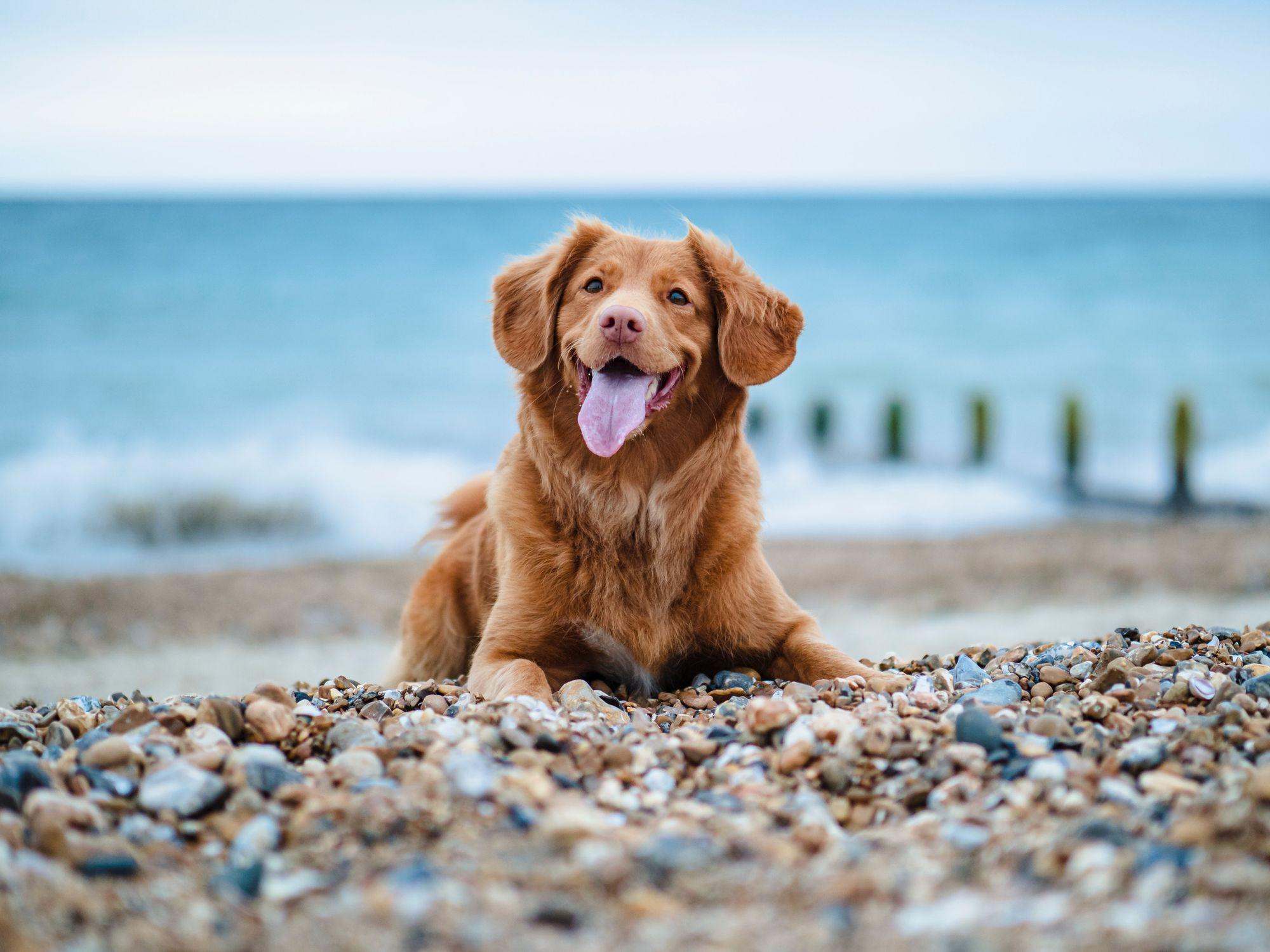 Greek Names for Female Dogs